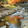 深山幽谷 山紫水明 仏通寺川のせせらぎと紅葉