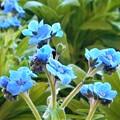 写真: 早春のさわやかブルー
