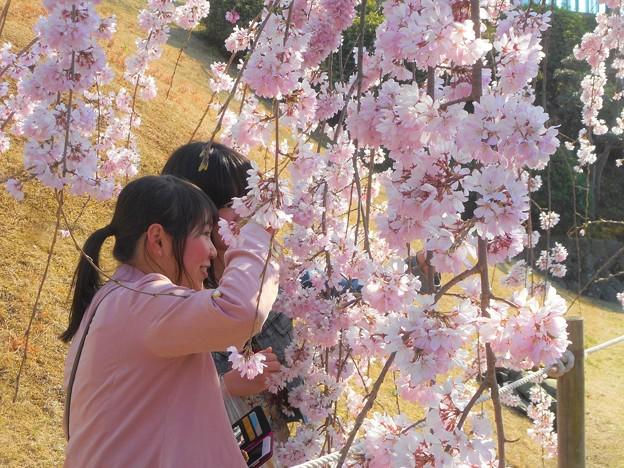 撮影スポットは花盛り@三春滝桜 in 千光寺山