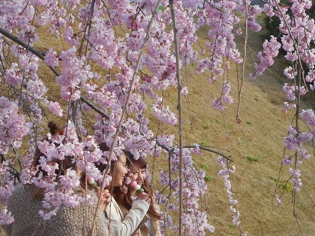 さくら娘@三春滝桜