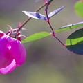 写真: 花も葉も美しく
