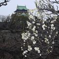 写真: 大阪城公園の梅林11