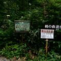 Photos: tsug076