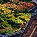 大矢田神社 社殿から