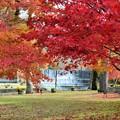 雨情公園の紅葉