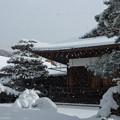 雪の金閣寺 (8)
