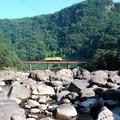 写真: 黄色い列車