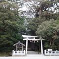 写真: タブの木で覆われた、大穴持像石神社