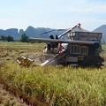 写真: 北海道でも見ないような大型コンバインです
