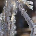 写真: 霜
