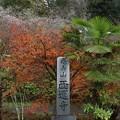 Photos: 小原西運寺四季桜と紅葉