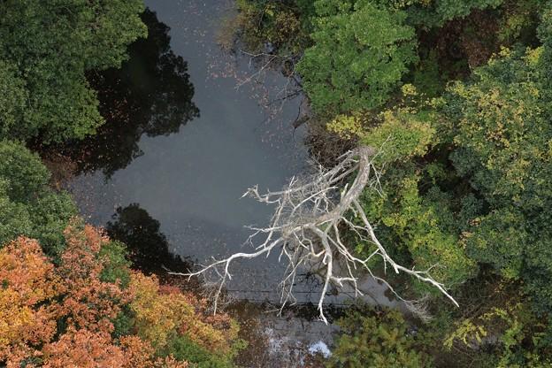 森林公園枯れ木と黄葉