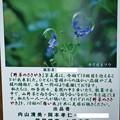 Photos: 第10回『野草のささやき』写真展