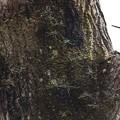 クモラン(蜘蛛蘭) ラン科
