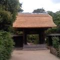 写真: 常楽寺の山門葺き替え(7月20日)