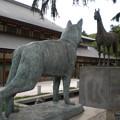 軍馬と軍犬(9月4日、靖国神社)