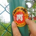 防犯シール(10月9日、鎌倉ガーディアンズ)