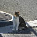 道端の猫(10月16日)