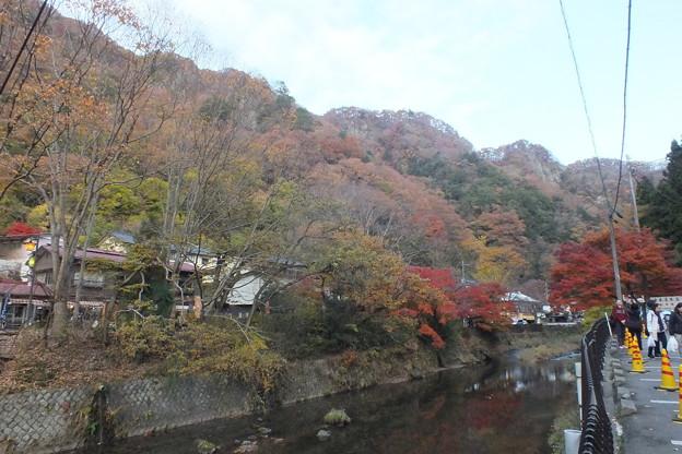滝川の紅葉  F8710