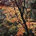 東福寺_京都 D0367