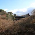 東福寺_京都 D0368