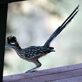 Photos: Roadrunner (1)