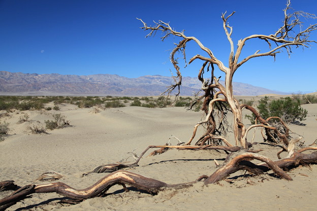 Death Valley NP (1)