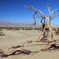 Photos: Death Valley NP (1)