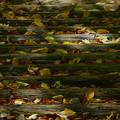 Photos: 秋を積む