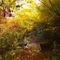 Photos: 滝へと続く径