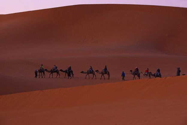 曙の砂丘を行く