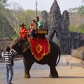 写真: 象と南大門