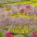 Photos: 花の庭