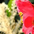 写真: 噛み締める花言葉