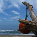 Photos: 流木と浮き