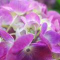 写真: 花のゆりかご