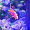 紫陽花の海2