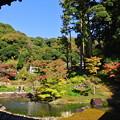 写真: 錦の庭