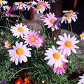 春待ち顔の花たち