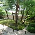 Photos: IMGP0403安来市、足立美術館日本庭園アナグマ家族発見!