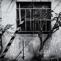 写真: P2250092-Edit-2