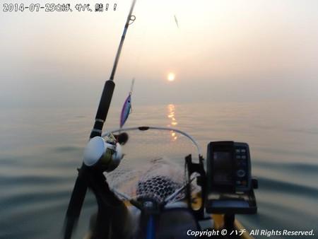 2014-07-25さば、サバ、鯖!! (2)