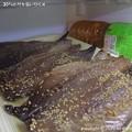 Photos: 2014-07-30鯖と鯵を食い尽くす (5)