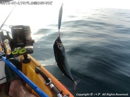 2014‐09‐6,7サバしか釣れないけど (5)
