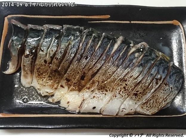 Photos: 2014‐09‐6,7サバしか釣れないけど (16)