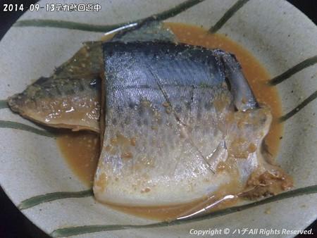 2014-09-13デカ鯵回遊中 (9)