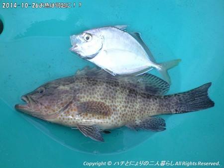 2014-10-26お魚は何処に!? (8)