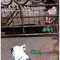 写真: 20110513_04