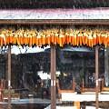 写真: 湿雪の忍野八海 (蔵出し)