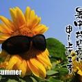 Photos: 暑中見舞い
